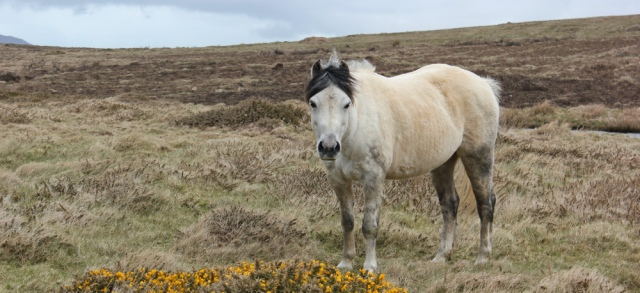 14 horse on the coastal path, Ruth Livingstone in Wales