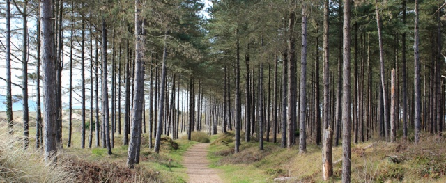 03 Newborough Forest, Ruth waking the Wales Coast Path, Anglesey