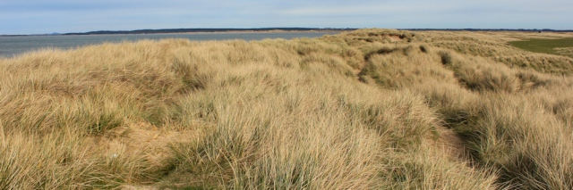 05 grassy dunes, Morfa Dinlle, Ruth hiking to Caernarfon