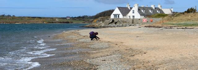 07 pebble picker, Traeth Cymyran, Ruth's coastal walk, Anglesey