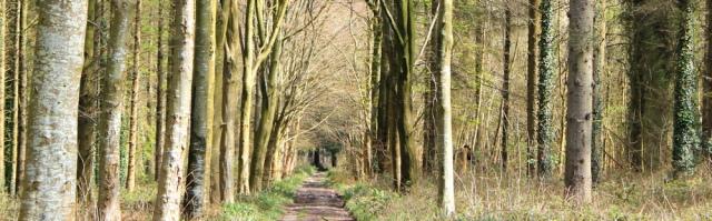 07 Vaynol Wood, Ruth on the Wales Coast Path, Bangor