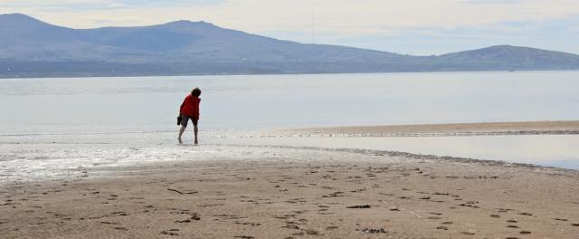 07 wading across to Llandwyn Island, Ruth's coastal walk, Anglesey