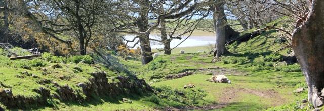 13 dead sheep, Isle of Anglesey Coastal Path, Ruth Livingstone