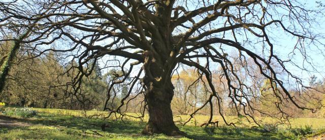 14 Lucombe Oak, Ruth on the Wales Coast Path