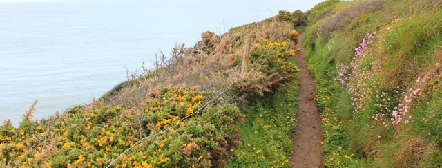 04 spring flowers, Ruth trekking in Anglesey, Wales