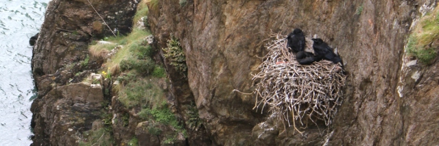 15 crows nest on cliff, Ruth trekking around Anglesey