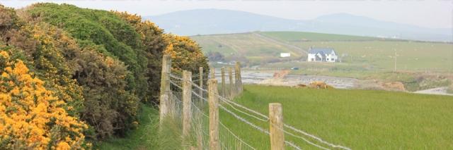 Ruth's coastal walk, Anglesey, Wales