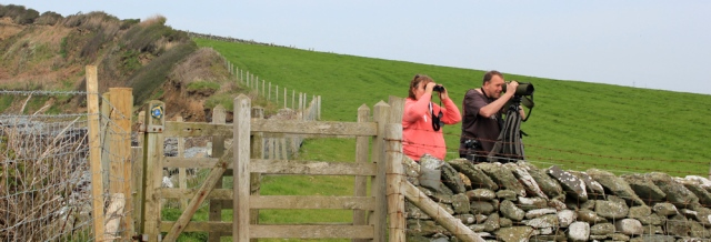 20 twitchers, Ruth in Anglesey