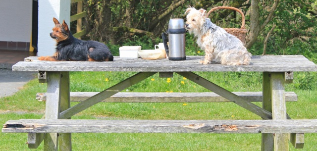 24 dogs on picnic table, Ruth's coastal walk, Holyhead