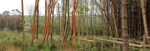 26 red trees, Wylfa Power Station, Ruth's coastal walk, Anglesey