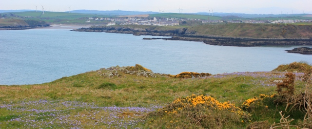 29 Wylfa Head to Caemas, Ruth's coastal walk, Anglesey