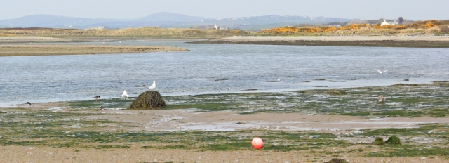 a08 mouth of the estuary up to Llanfachraeth, Ruth's coastal walk