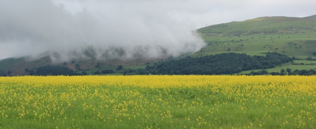 a15 rape fields and clouds, Ruth hiking the coast, Snowdonia