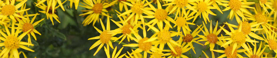 flowers, Ruth Livingstone