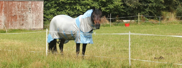 06 horse in a raincoat, Ruth Livingstone