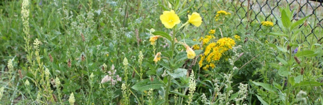 06 wild flowers, cycleway to Neston, Ruth's coatal walk