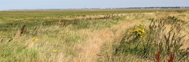 08 footpath along the marsh wall, Ruth's coastal walk, Ribble Estuary