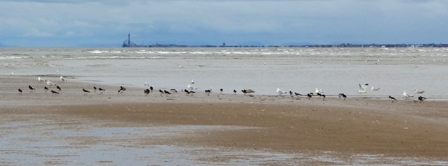 10 Blackpool in distance,Birkdale Sands, Ruth's coastal walk to Southport