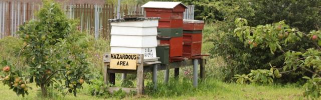 11 beehives, Deeside Industrial Park, Ruth Livingstone hiking