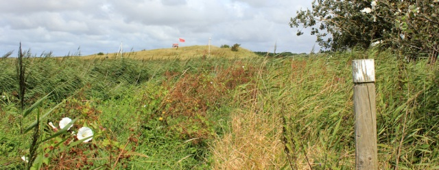 18 overgrown Sefton Coastal Path, Altcar Rifle Range