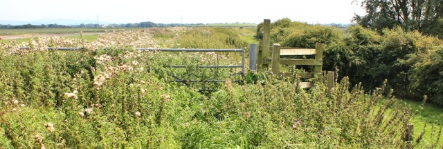 22 overgrown path, Ruth walking the Ribble Estuary towards Hesketh Bank