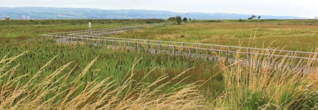 a01 board walk across marsh, Ruth's coastal walk, Wirral