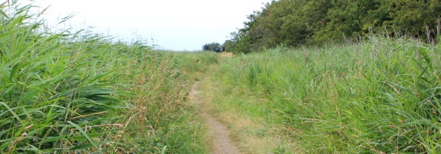 a11 path through grasses, Ruth hiking Wirral