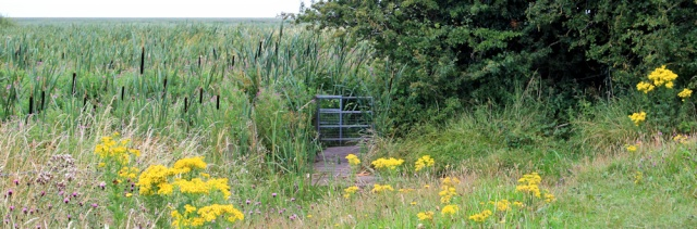 a12 path through the reeds, Ruth Livingstone, Wirral Peninsula