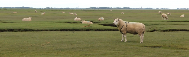 03-ram-cockerham-sands-ruths-coastal-walk-around-the-uk