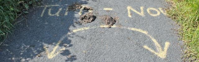 11-turn-now-ruth-walking-the-english-coast-cycle-path