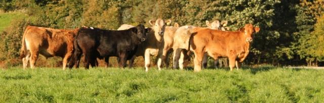 05-bullocks-ruth-walking-the-english-coast-cumbria