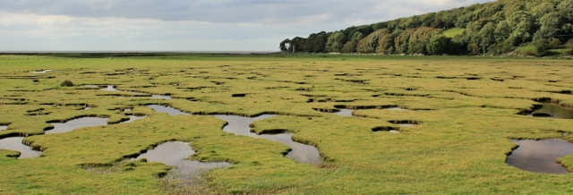 10-leighton-moss-nature-reserve-ruth-walking-the-english-coast