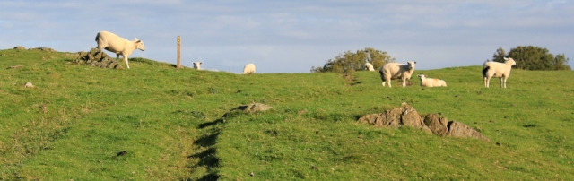 10-sheep-on-how-barrow-ruth-walking-the-english-coast