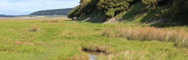 12-wading-through-marsh-ruth-hiking-the-lancashire-coastal-way