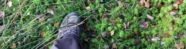 20-moss-means-bog-ruth-livingstone-hiking-in-cumbria
