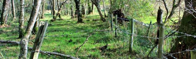 21-more-barbed-wire-ruth-hiking-in-cumbria