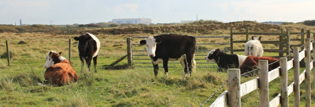 27-cows-guarding-the-gate-ruth-livingstone