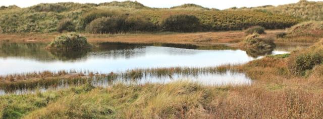 28-north-end-rabbit-warren-walney-island-ruths-coastal-walk