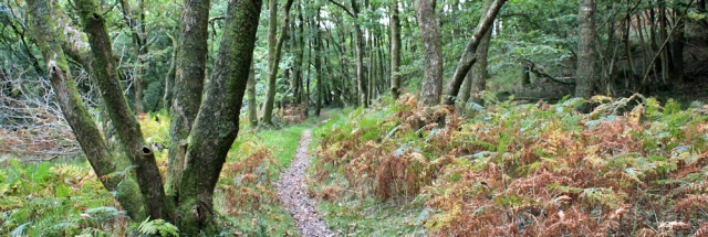 28-stribers-woods-ruth-walking-the-english-coast-cumbria