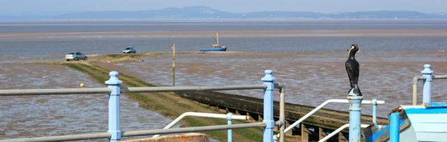 b11-cormorant-overlooking-morecambe-bay-ruth-walking-the-english-coast