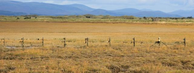 fence-ruth-walking-the-coast-barrow-in-furness