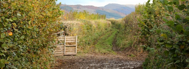 09-muddy-track-to-waberthwaite-ruth-livingstone-walking-the-english-coast-cumbria