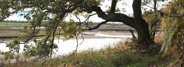 23-woodland-walk-river-esk-ruth-livingstone-walking-the-english-coast