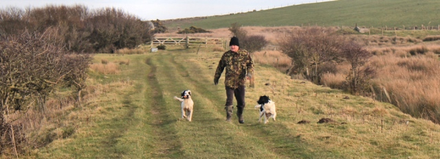 11-friendly-dogs-ruth-livingstone-walking-the-english-coast-cumbria
