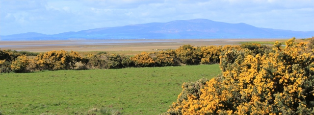 15 Criffel across Solway, Ruth walking the coast in Cumbria