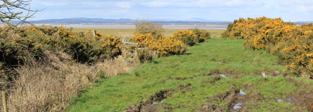 24 Campfield Marsh, Ruth's coastal walk, Cumbria