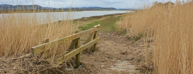 05 flotsam on the path to Dumfries, Ruth Livingstone walking the Scottish coast