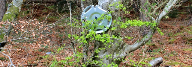 05 hubcap in tree, Ruth walking the Scottish coast, Dumfries and Galloway