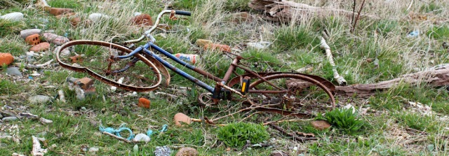 11 bicycle driftwood, Ruth's coastal walk, Dumfries and Galloway