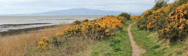 13 Criffel ahead, Ruth's coastal walk, Dumfries and Galloway
